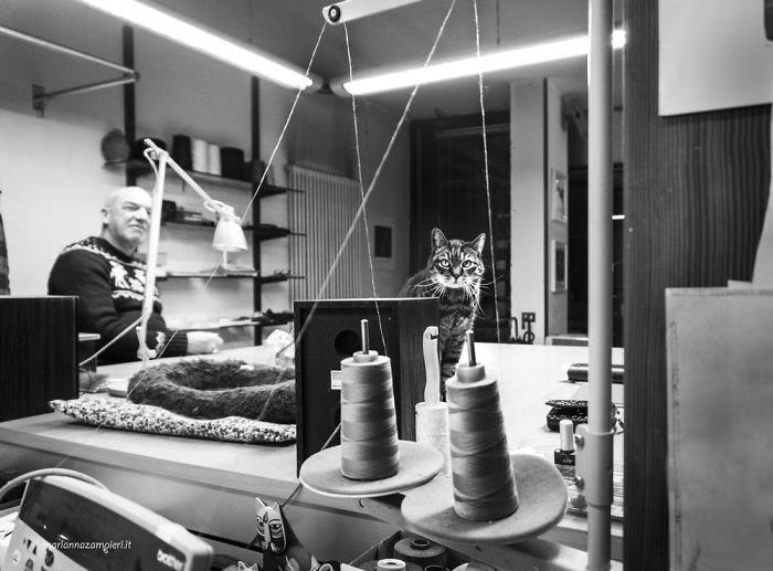 6. Пепе в ателье у портного домашние животные, коты, кошка, кошка в магазине, кошки, фотопроект, черно-белая фотография, черно-белое фото