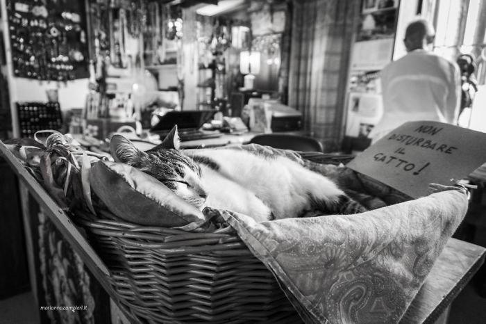 """1. Рави в магазине этнических товаров. """"Кота не беспокоить!"""" домашние животные, коты, кошка, кошка в магазине, кошки, фотопроект, черно-белая фотография, черно-белое фото"""