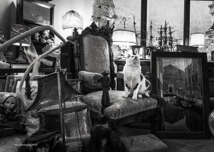 11. Оскар в антикварной лавке домашние животные, коты, кошка, кошка в магазине, кошки, фотопроект, черно-белая фотография, черно-белое фото