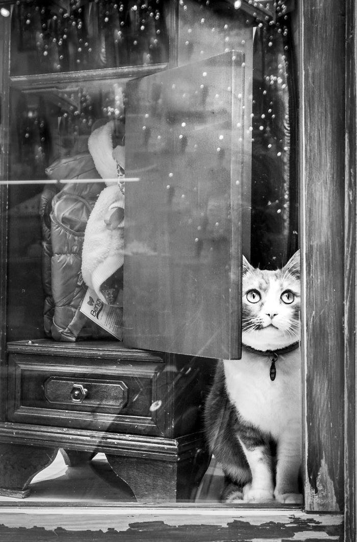 5. Пальмира в зоомагазине домашние животные, коты, кошка, кошка в магазине, кошки, фотопроект, черно-белая фотография, черно-белое фото