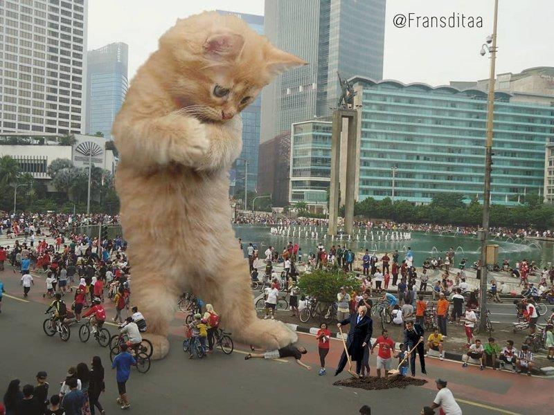 Порция котиков для лайков Макрон, Трамп, прикол, фотошоп, юмор