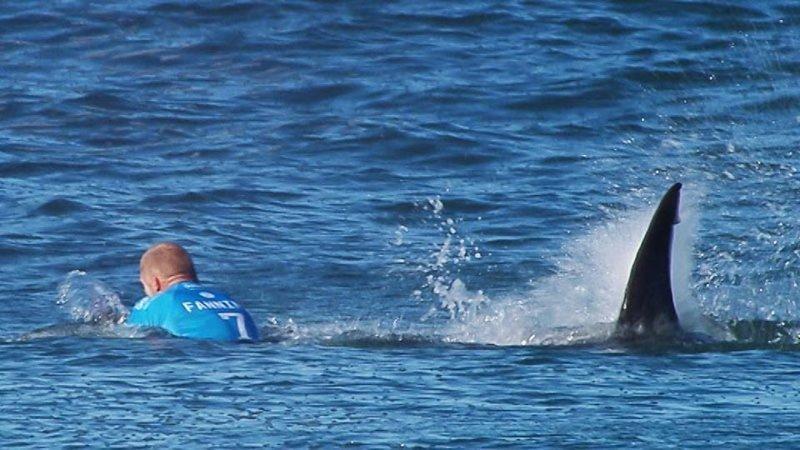Турист-неудачник притягивает к себе хищников! акула, вечная жертва, змея, колорадо, медведь, нападение хищников, неудачник, турист