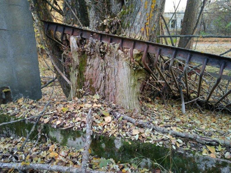 Дерево, проросшее сквозь металлическую решётку Припять, Чернобыль, атомная станция, чаэс