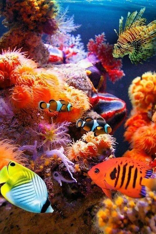 Рыбы животные, интересное, кораллы, красиво, красочно, подводное царство, природа, ярко