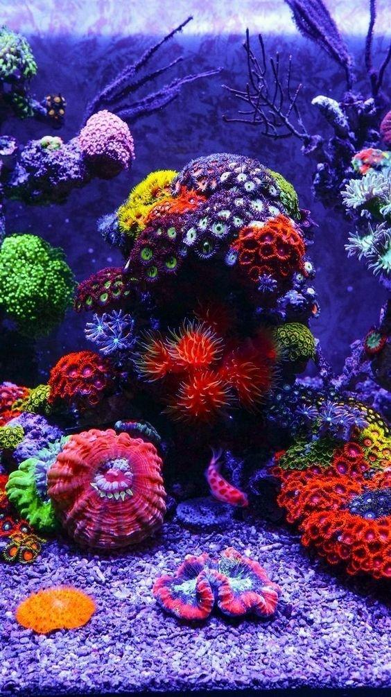 Кораллы животные, интересное, кораллы, красиво, красочно, подводное царство, природа, ярко