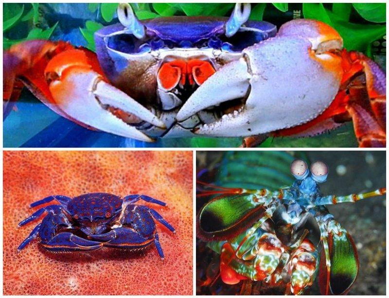 Яркость подводного царства животные, интересное, кораллы, красиво, красочно, подводное царство, природа, ярко
