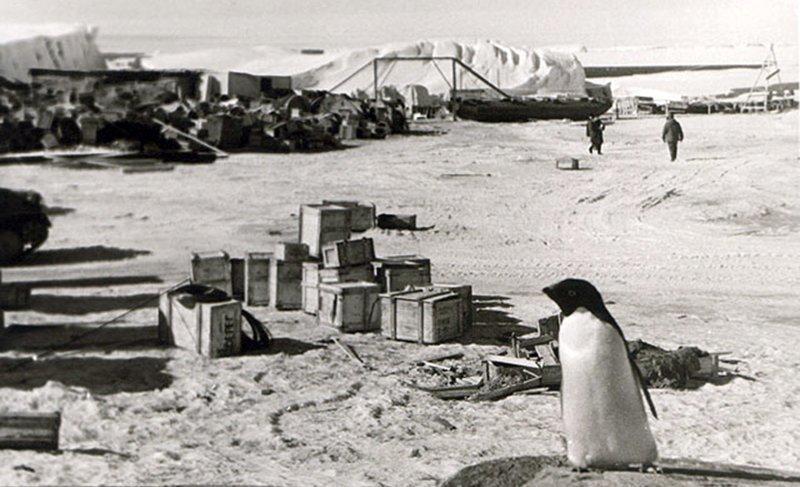 «Он в холоде сам себе скальпелем там вырезает аппендикс…» Леонид Рогозов, антарктида, день в истории, интересное