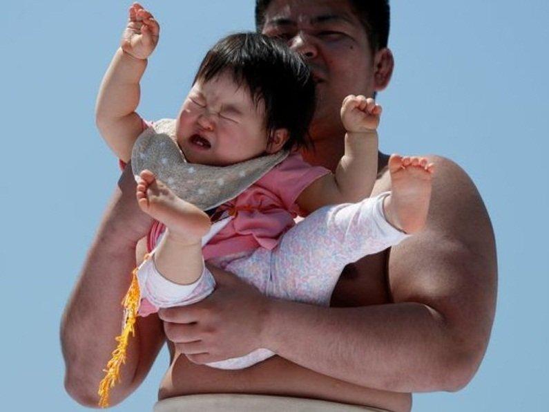В Японии борцы сумо вынуждают рыдать младенцев ynews, видео, младенцы, сумо, традиции, япония