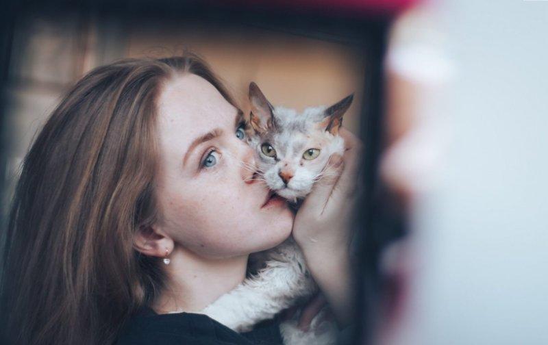 «Мы не знали о том, что нас ждёт!» Они случайно принесли домой дочь сфинкса и домашней кошки животные, история, кошки