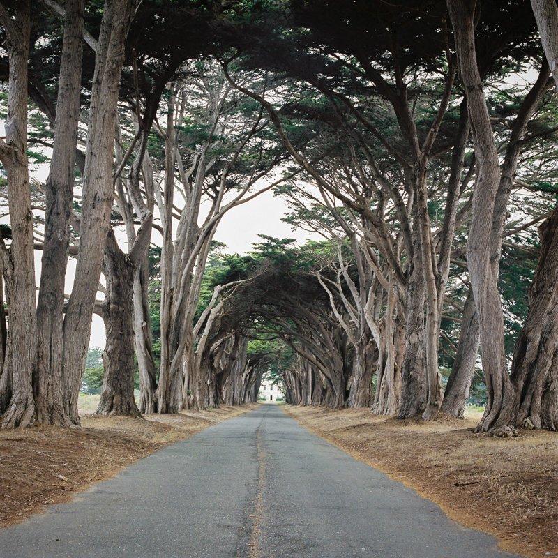 Умиротворяющие пейзажи живописного полуострова на Тихоокеанском побережье США point reyes, калифорния, природа, фотография