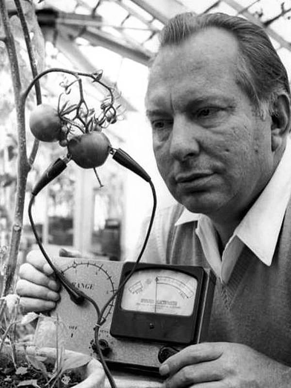 Знаменитый Л. Рон Хаббард, основатель Церкви сайентологии, изобрел электрометр Хаббарда в 1968 году, чтобы узнать, могут ли помидоры почувствовать боль. Его вывод заключался в том, что помидоры «кричат, когда их нарезают». история, черно-белая фотография, юмор