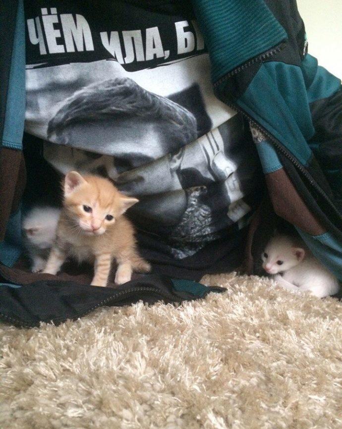 «Беременная глухая кошка с Авито? Рискнём!» Никому не нужная мать оказалась чудом история, кошки, спасение