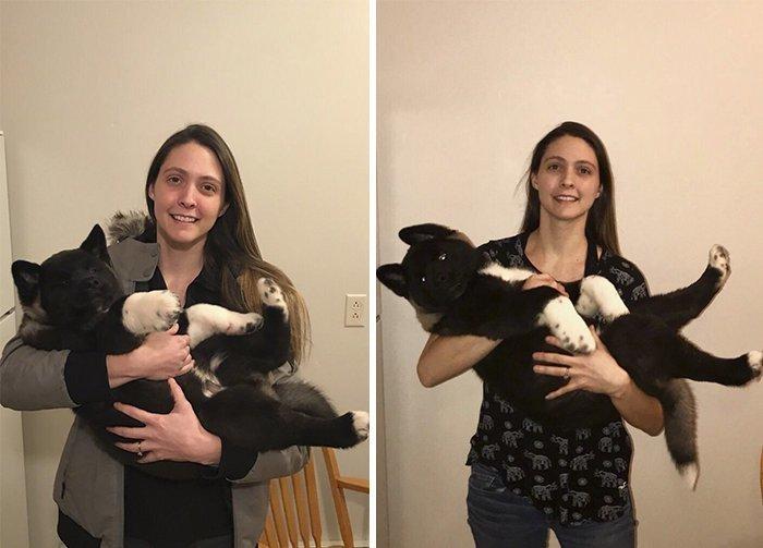 Слева - щенку 10 недель, справа - один месяц акита, до и после, животные, мило, собака, собаки, фото, щенок