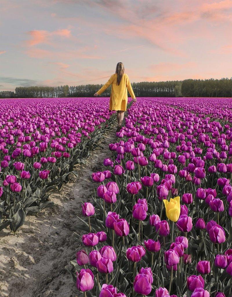 В Нидерландах расцвели 7 миллионов тюльпанов: необыкновенные кадры Тюльпаны, голландия, красиво, красивый вид, нидерланды, природа, фото, цветы