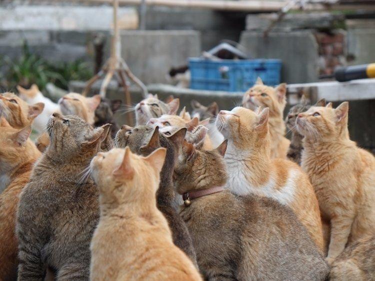 12. Остров Котов в Японии. Странные места, авто, города, интересно, музей, путешествие, путешествия