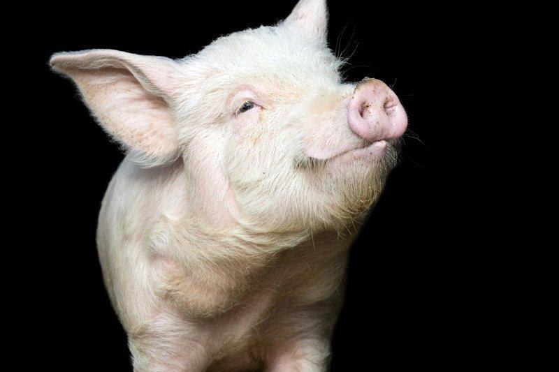 Общение с животными в детстве защитит от стресса ynews, домашние животные, иммунитет, исследования, стресс