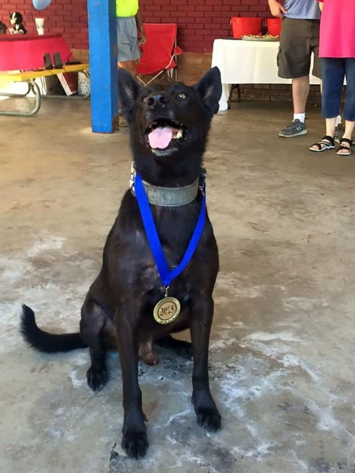 Несомненно, у офицера Фрейзера есть самый лучший друг и напарник! животные, истории, нападение, собака, собаки, спасение, трогательно, фото