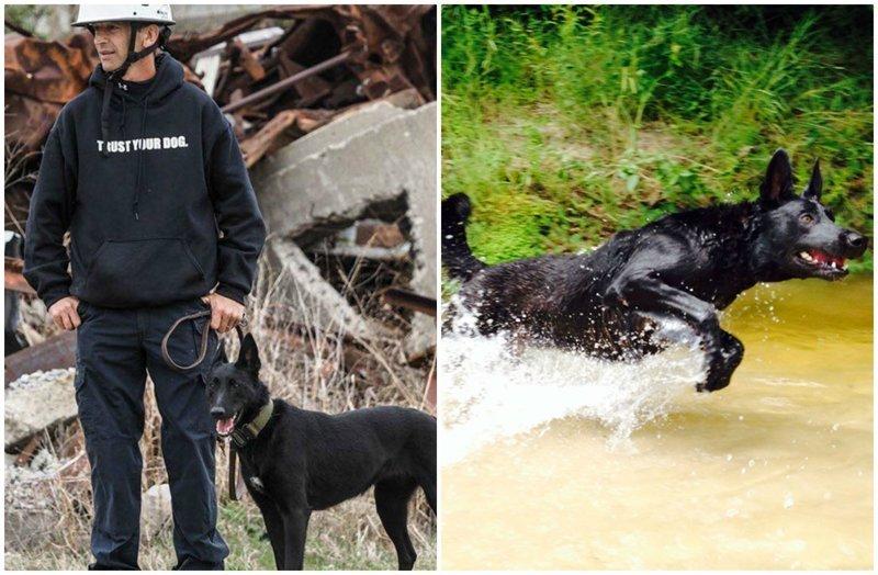 Собака спасла хозяина от смерти, хотя сама могла погибнуть животные, истории, нападение, собака, собаки, спасение, трогательно, фото