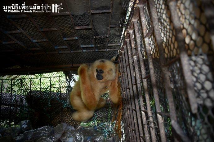 Золотистый ребёнок жил в мешке мусора 10 лет! Его владельцы вызвали спасателей от отчаяния животные, история, спасение