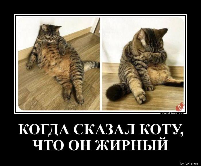 Когда сказал коту, что он жирный демотиватор, демотиваторы, жизненно, картинки, подборка, прикол, смех, юмор