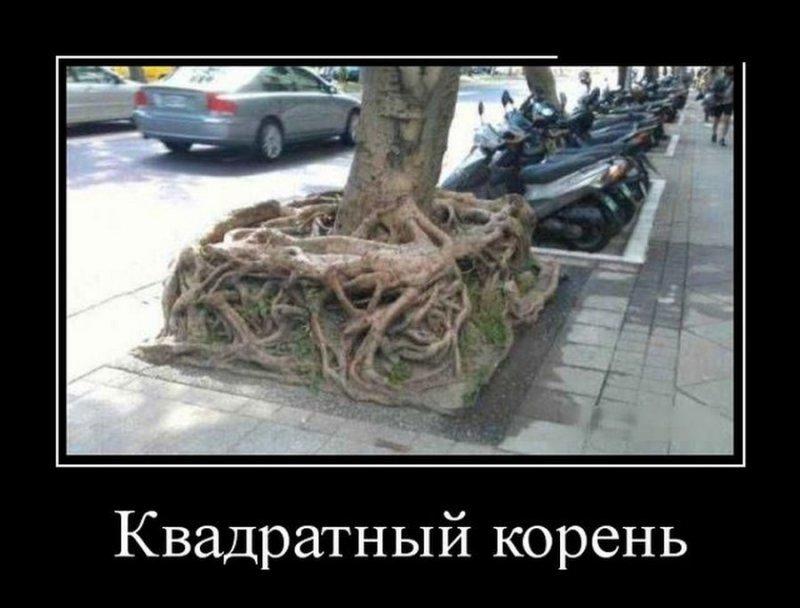 Квадратный корень демотиватор, демотиваторы, жизненно, картинки, подборка, прикол, смех, юмор