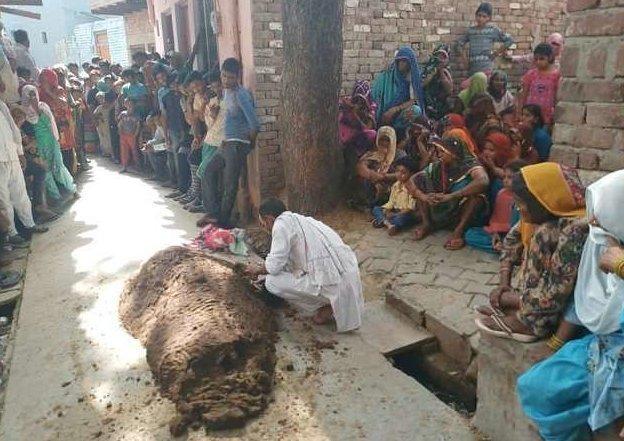 Индианка погибла в куче навоза, пытаясь излечиться от укуса змеи знахари, индия, навоз, самолечение, смерть, укус змеи