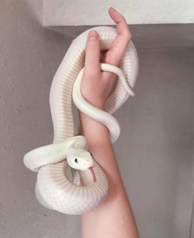 Белая змейка день, животные, кадр, люди, мир, снимок, фото, фотоподборка