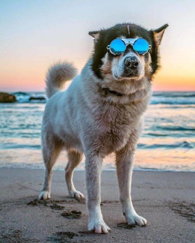 Собака в очках день, животные, кадр, люди, мир, снимок, фото, фотоподборка