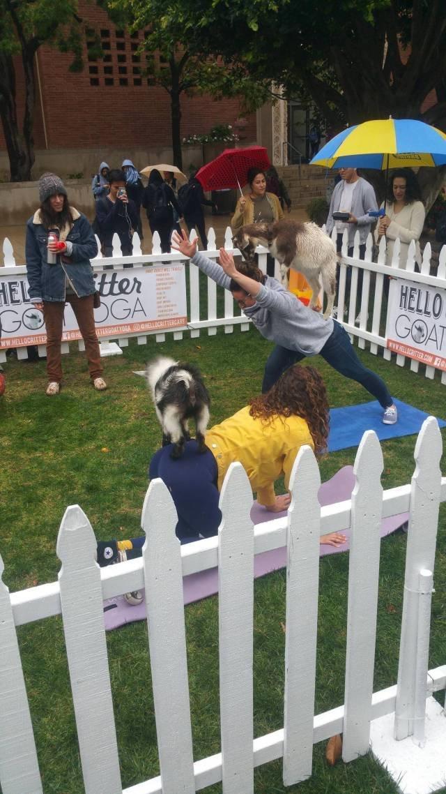 Йога с козами день, животные, кадр, люди, мир, снимок, фото, фотоподборка