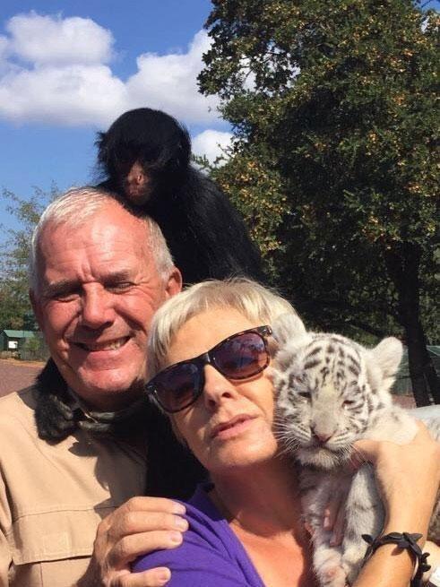 """Семья """"опустошена"""" гибелью Шамбы и """"травмирована"""" инцидентом  животные, кадр, лев, нападение, сафари парк, хищник, человек, юар"""