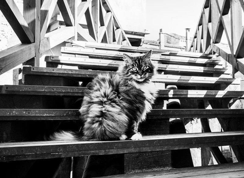 Великолепные кошки в объективе Марианны Зампиери Марианна Зампиери, животные, италия, кошка, работа, фотография, фотомир