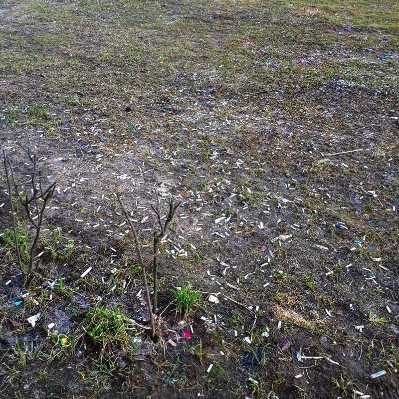 2. Весной везде появляются подснежники. Вот такие в Приморском районе Санкт-Петербурга во дворе, дворы, на районе, панельки, спальная россия, спальные районы