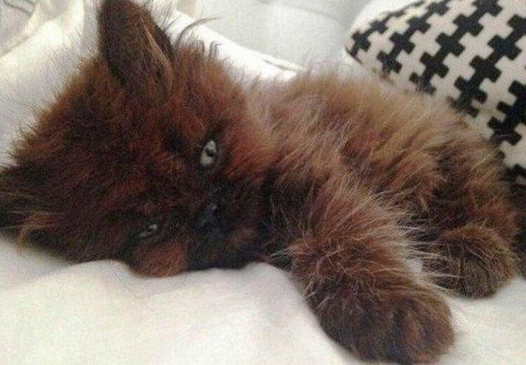 Девочка спасла Домовенка, но спустя год ее ждал большой сюрприз история, кошки, спасение