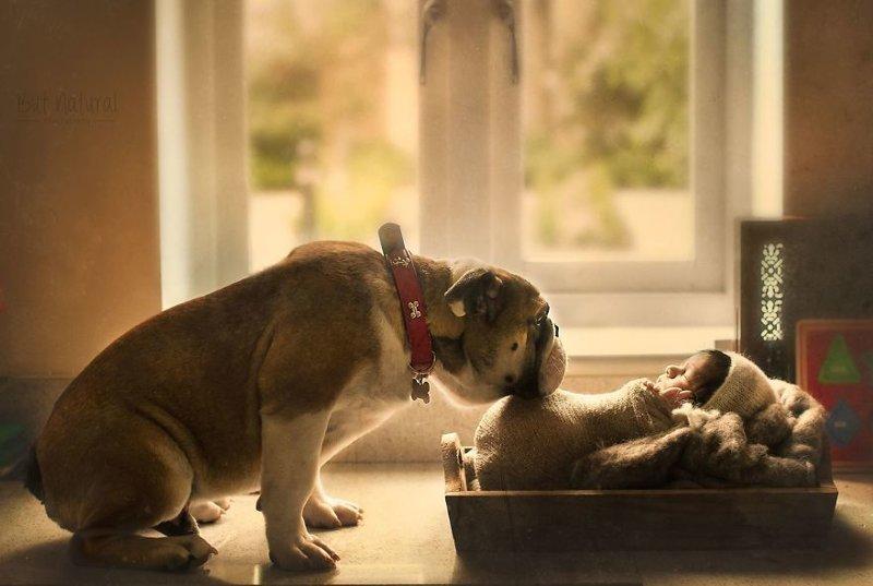 Суйату часто просили сфотографировать малышей с ее собакой по кличке Мустанг (на фото). К несчастью, в прошлом году пёс умер, и хозяйка долго не могла пережить это горе. дети, животные, малыши, мило, мимиметр, младенцы, фото, фотографы