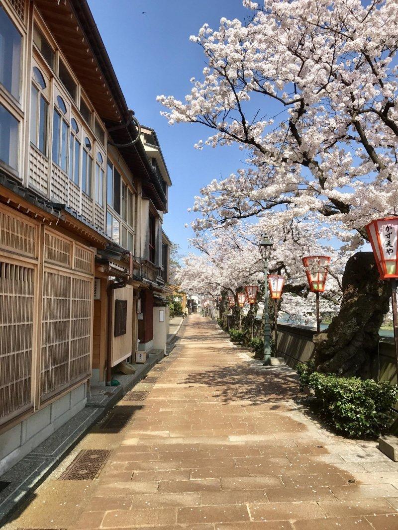 Канадзава, Япония день, животные, кадр, люди, мир, снимок, фото, фотоподборка