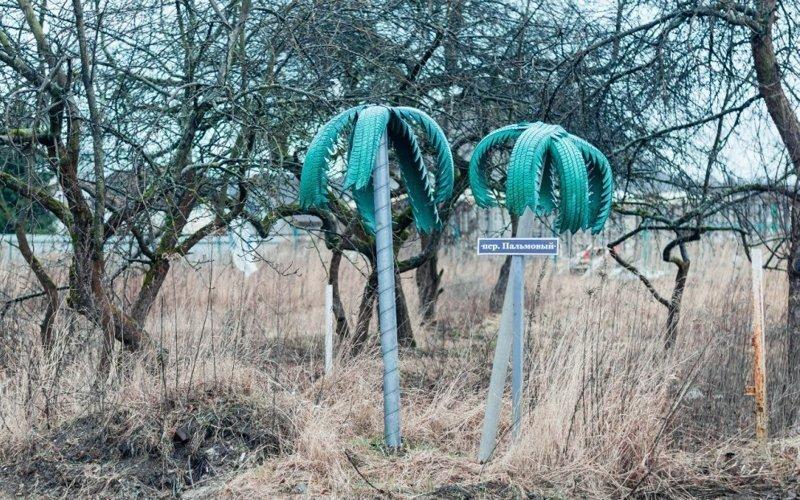Калининградские резиновые пальмы двор, забавно, прикол, украшение, юмор