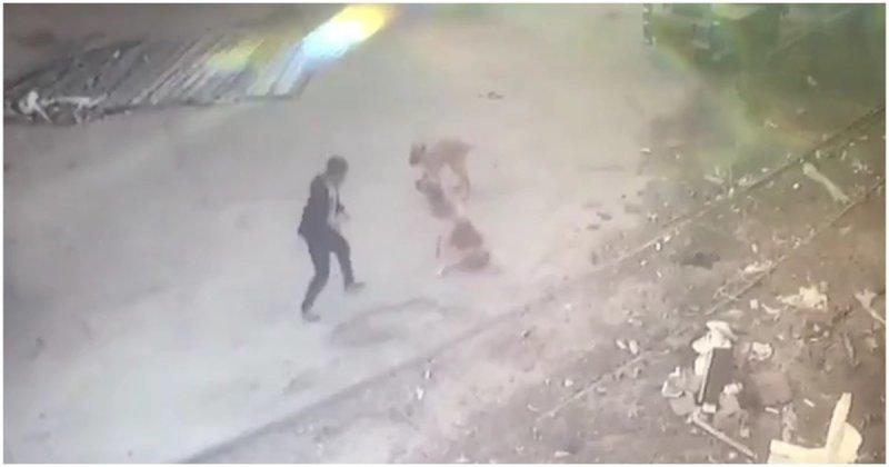 Житель Дагестана подрался с напавшей на него бродячей собакой видео, дагестан, драка, животные, собака, собаки, схватка