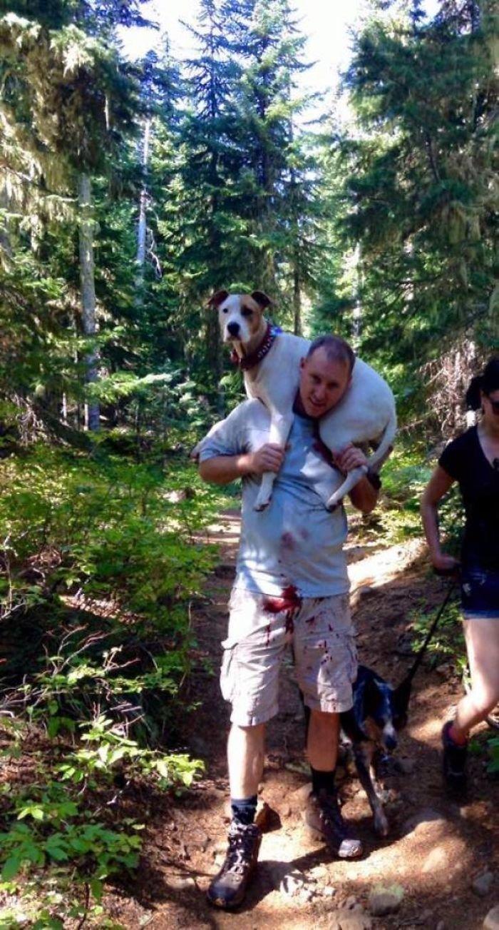 6. Во время прогулки по лесу собака разорвала артерию на ноге. Этот незнакомец помог хозяйке донести 31-килограммового пса. Он отказался от денег, а просто попросил сделать фото. Добрые дела, добро, истории, люди, подборка, позитив, трогательно, фото