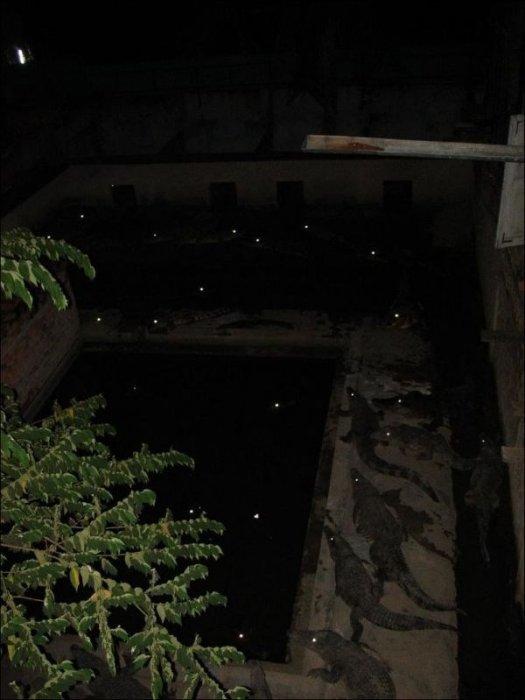 15. Вид из окна гостиницы в Комбодже безопасность, дизайн, интересно, квартира, оригиналы, решетки, решетки на окна, фото