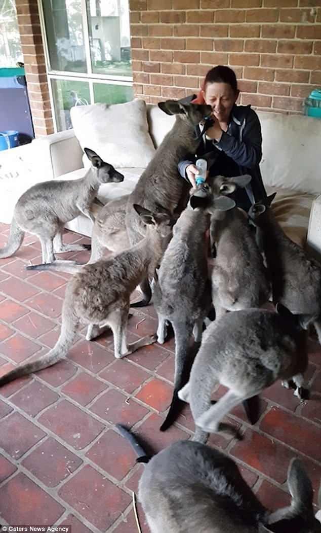 В заповеднике Лоры и ее партнера Сайо работают волонтеры. Это один из немногих заповедников для кенгуру с большой площадью (27 гектаров) - для животных здесь раздолье. видео, животные, заповедник, кенгуру, кенгурята, мило, позитив, фото