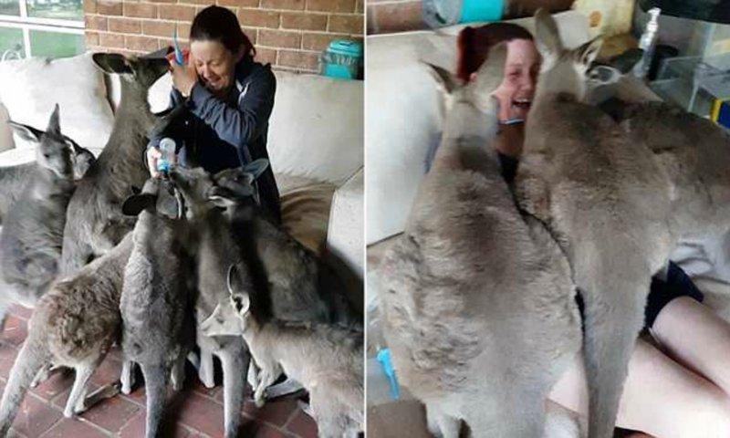"""Кенгуру много не бывает: голодные кенгурята """"атаковали"""" сотрудницу заповедника видео, животные, заповедник, кенгуру, кенгурята, мило, позитив, фото"""