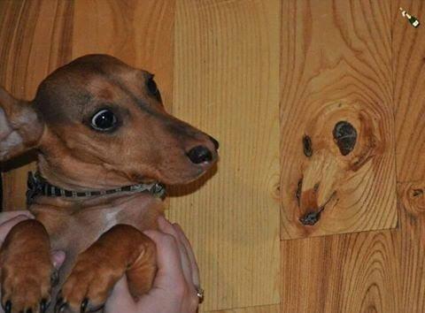 Деревянное зеркало иллюзии, прикол, фотофакт, юмор