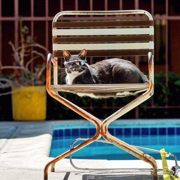 Греется на солнышке в мире, глаза, животные, кот, кошка, милота, очки