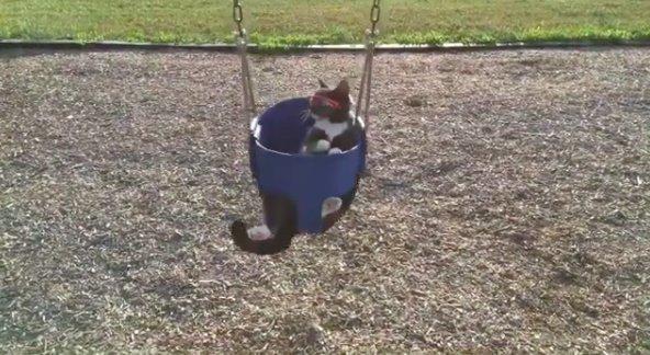 Любит качаться на качелях в мире, глаза, животные, кот, кошка, милота, очки