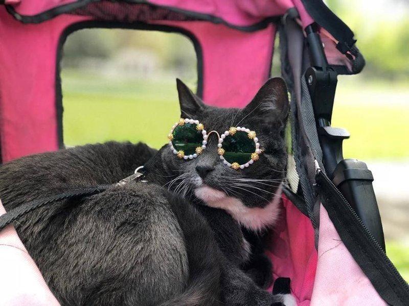Катается в своей коляске в мире, глаза, животные, кот, кошка, милота, очки