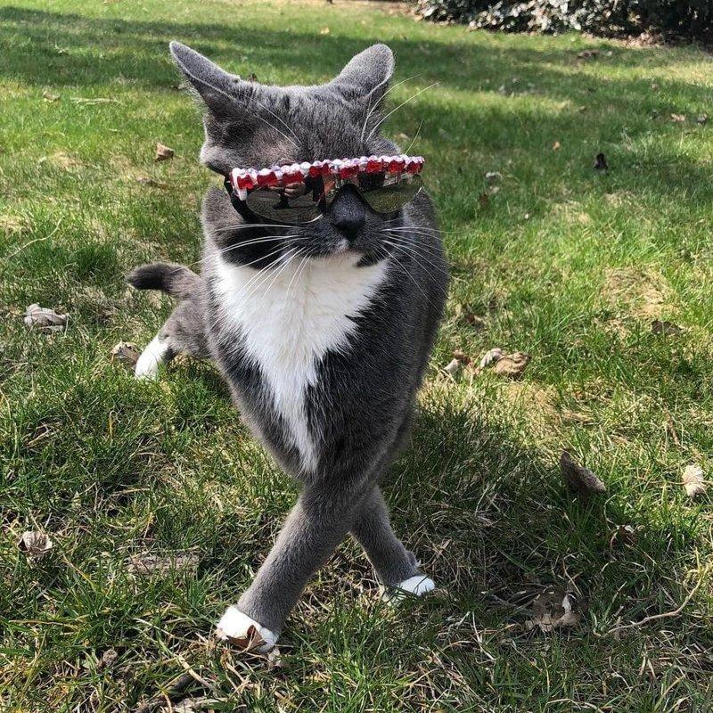Очки не только защищают глаза Бэйгл, но и делают её самой стильной и модной кошкой на районе в мире, глаза, животные, кот, кошка, милота, очки