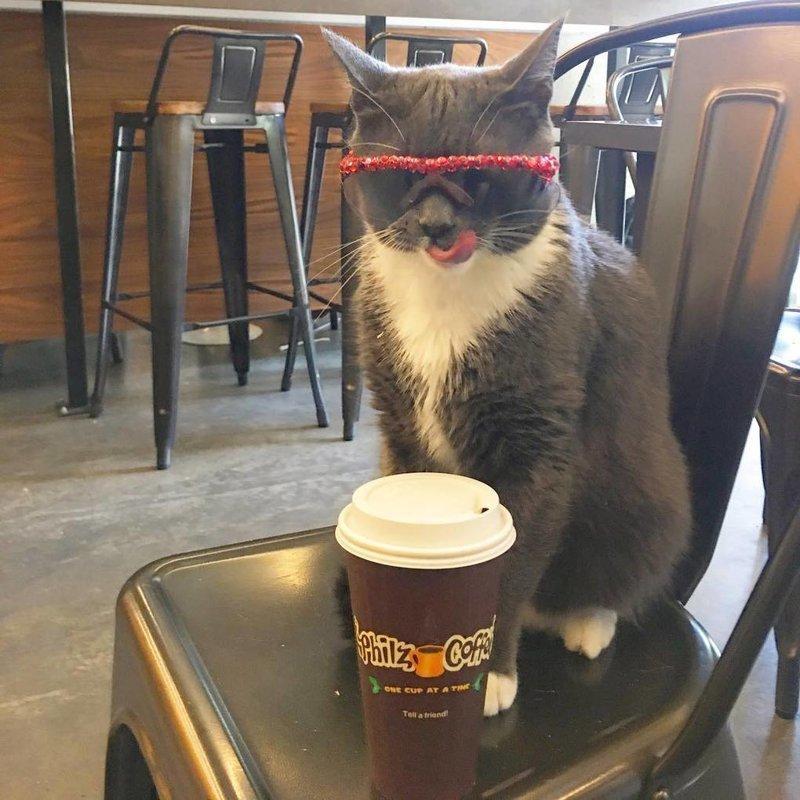 Она, кажется, сама не понимает, что какая-то не такая и просто наслаждается своей жизнью в мире, глаза, животные, кот, кошка, милота, очки