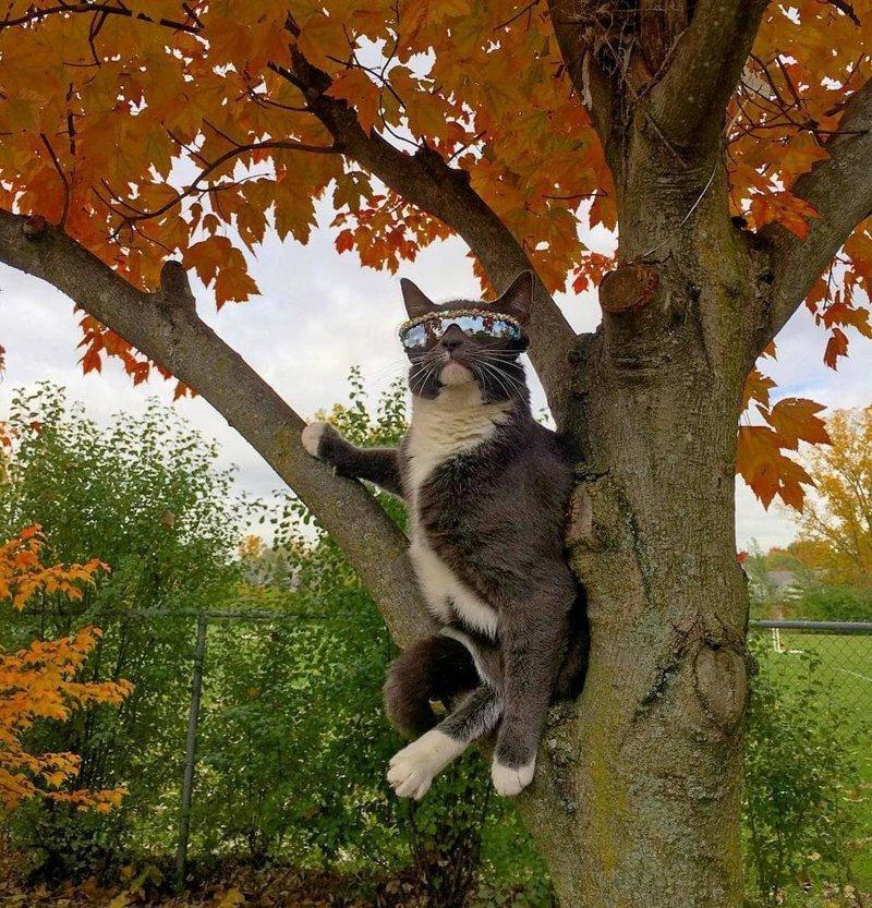 Лазает по деревьям в мире, глаза, животные, кот, кошка, милота, очки