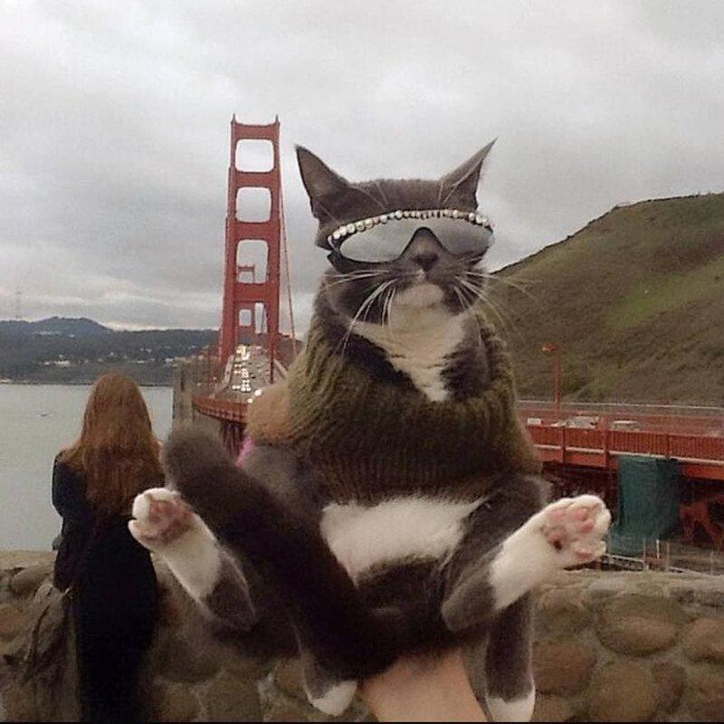 Путешествует со своей хозяйкой в мире, глаза, животные, кот, кошка, милота, очки