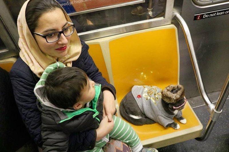 Ездит в метро в мире, глаза, животные, кот, кошка, милота, очки